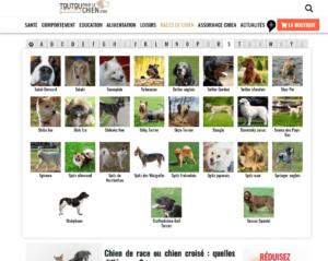 races de chiens toutoupourlechien